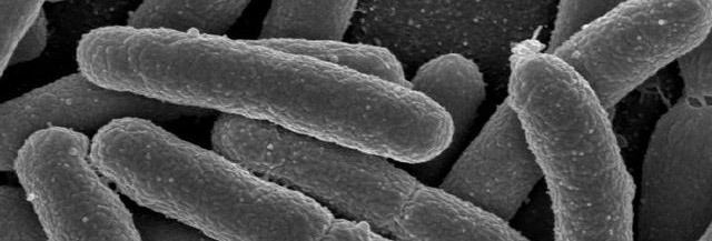 chlorine's effect on bacteria in the gut